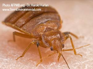 Don't be Negligent! Any Place Can get Bedbugs