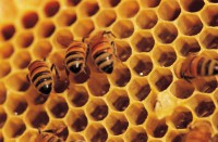 The University of Connecticut on Bee and Wasp Abatement - What to Know