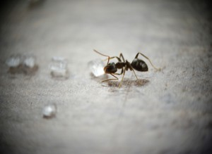 Ants Survived Millions of Years, Leave Getting Rid of Them to Professionals