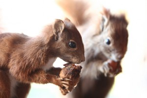 What to Know About Squirrel Breeding Season in New Jersey