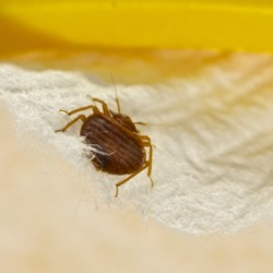 When You Need Help Call the Bed Bug Specialists - Stern Environmental Group!