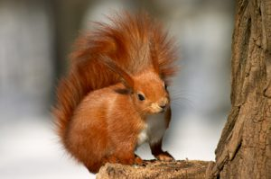 Five Weird Yet Interesting Facts About Squirrels