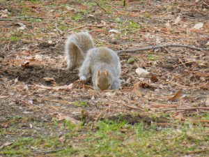 Squirrels Are Cute in Your Yard, But Not In Your Office!