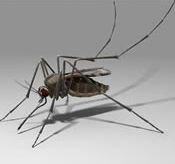 Plan Ahead for Mosquito Protection