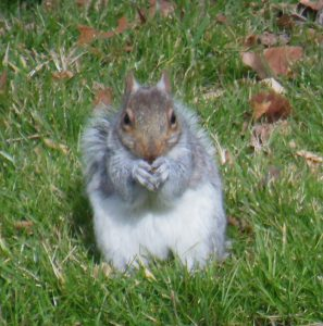 Squirrel Facts You Did Not Know
