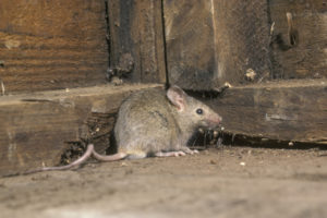 Roaches and Mice, Oh My! More Restaurants in NYC Have Been Hit With Violations This Year.